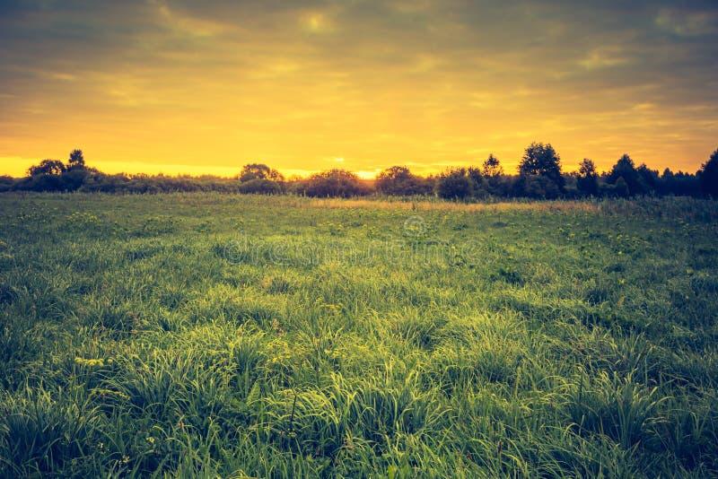 Rocznik fotografia piękny krajobraz z ranek łąką fotografia stock