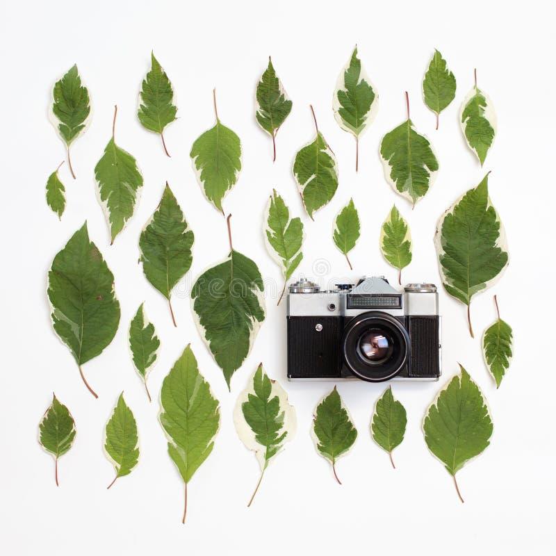 Rocznik fotografii retro kamera i zieleń liści wzór na bielu fotografia royalty free