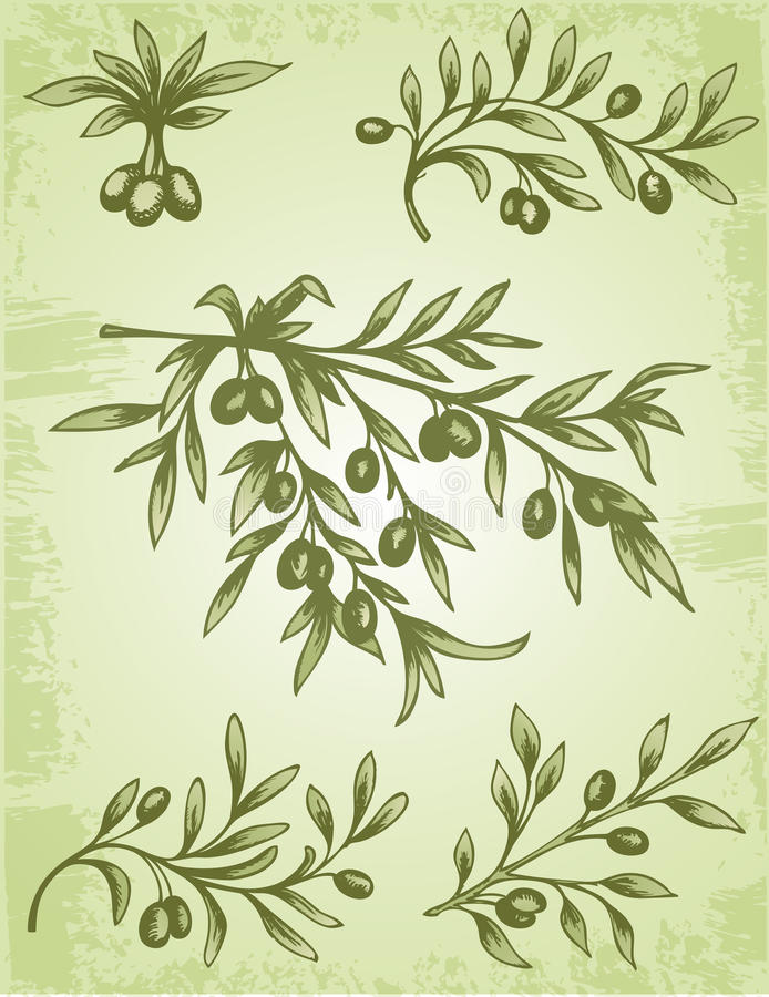 Rocznik gałązka oliwna ilustracji