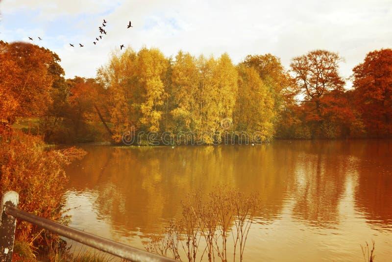 Rocznik jesień zdjęcie royalty free