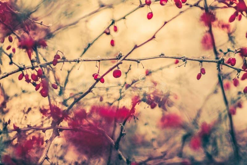 Rocznik jesieni abstrakcjonistyczny tło, natury sztuka piękna fotografia stock