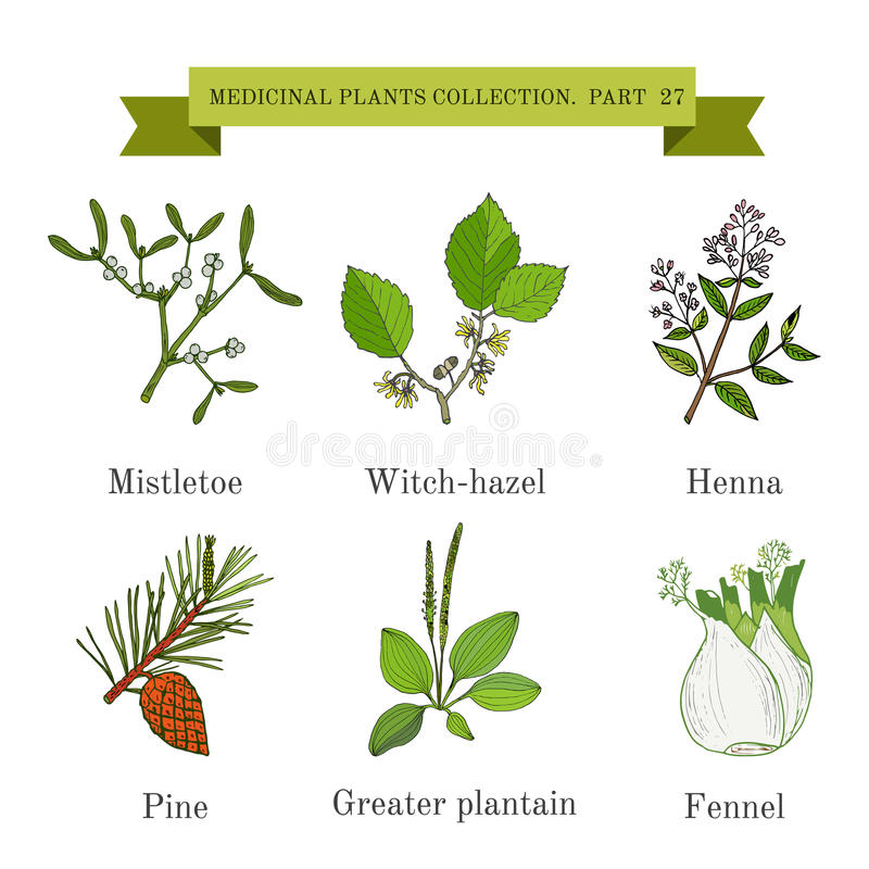 Rocznik kolekcja ręki rysujący ziele, medyczne rośliny i, jemioła, leszczyna, henna, sosna, wielki banan, koper ilustracja wektor