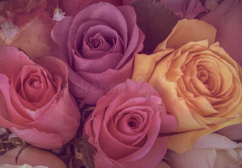 Rocznik kolorowe róże z ciemnawym światłem zdjęcia royalty free
