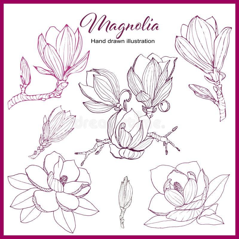 Rocznik magnolii kolekcja ilustracja wektor