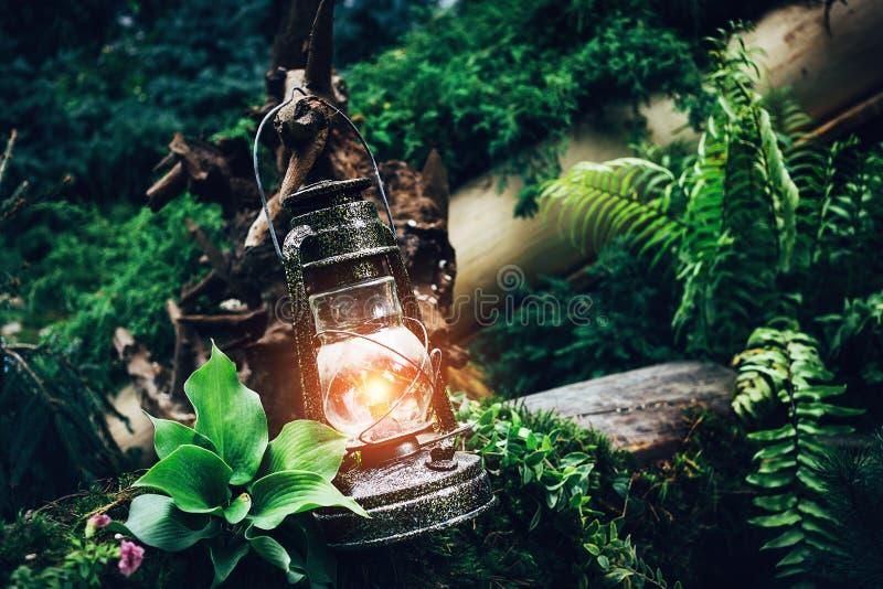 Rocznik nafty oleju latarniowy lampowy palenie z miękkiej części ciepłym światłem wśród zielonych rośliien w drewnie i lesie zdjęcie stock