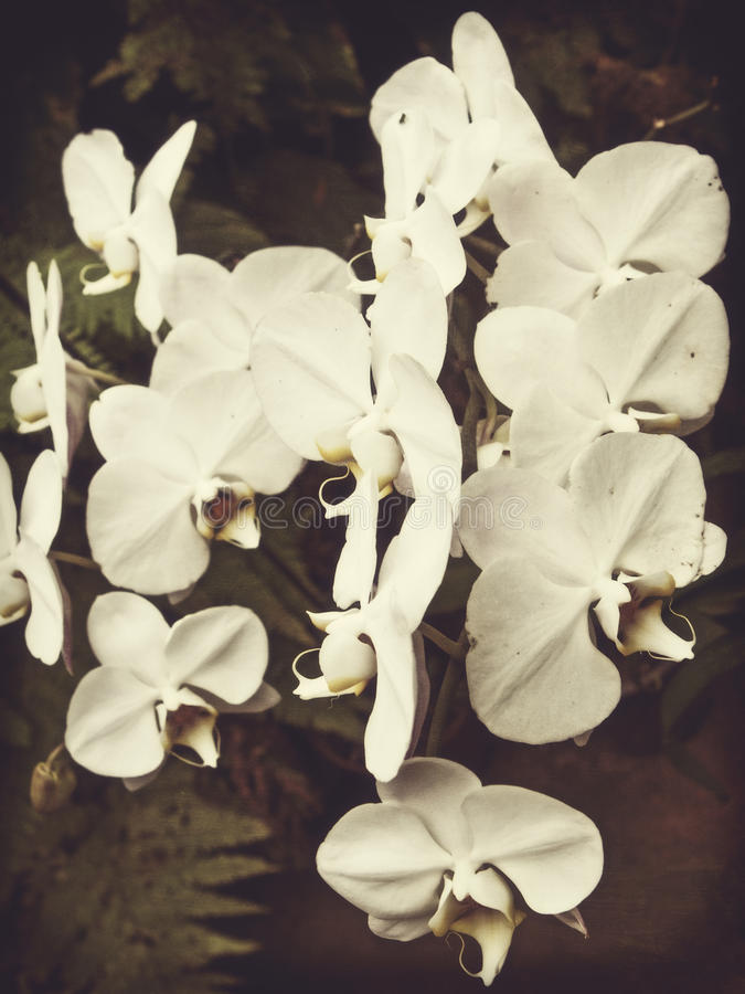 Rocznik orchidea obraz stock