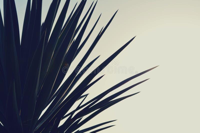 Rocznik - palmtree zdjęcie stock