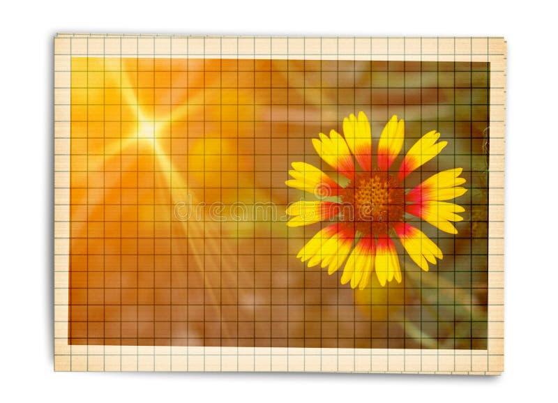 Rocznik pocztówka dla zaproszenia z żółtym kwiatu helenium ilustracji