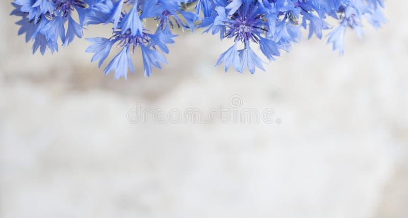 Rocznik pocztówka z błękitnym kwiatem zdjęcie royalty free