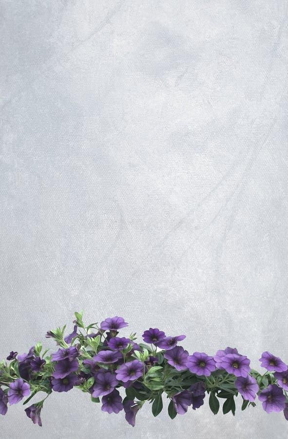 Rocznik purpurowa petunia kwitnie na pionowo chłodno szarej obraz olejny kanwie obraz royalty free