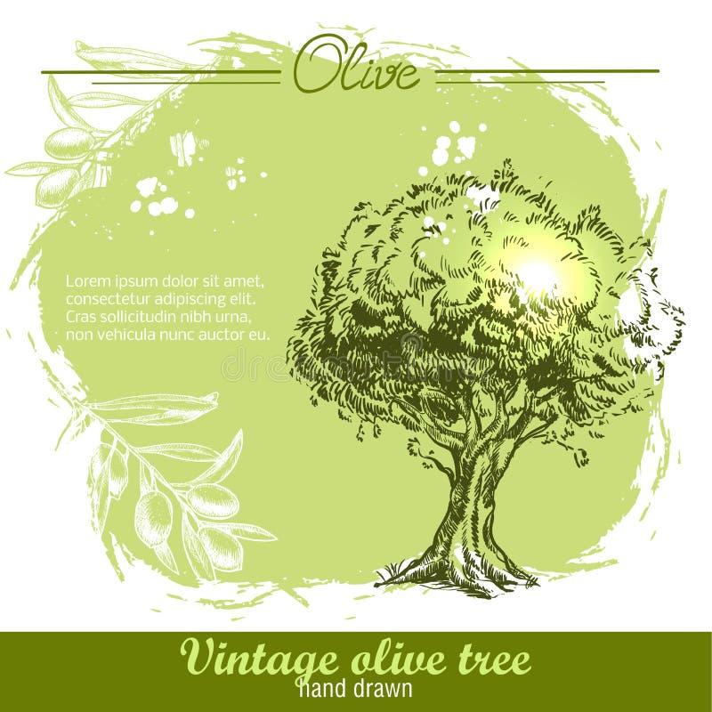 Rocznik ręka rysująca gałązka oliwna i drzewo oliwne ilustracja wektor
