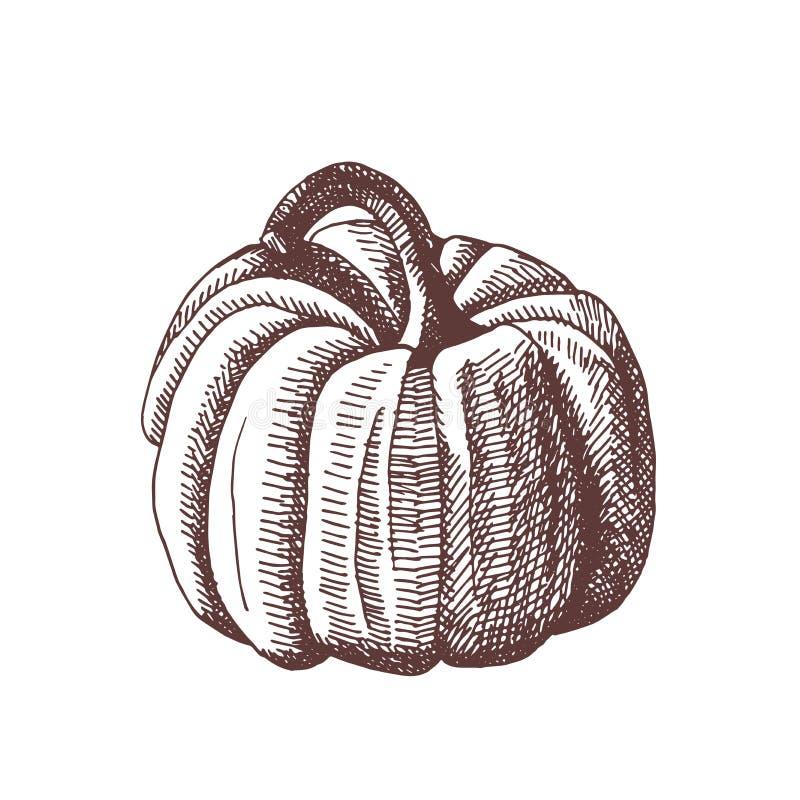 Rocznik ręka rysująca ilustracja jesień element Botaniczna ilustracja Bania ilustracja wektor