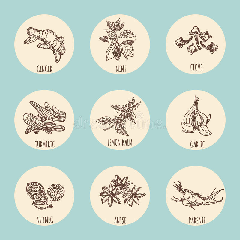 Rocznik stylowe ikony z popularna ręka rysować pikantność ilustracja wektor