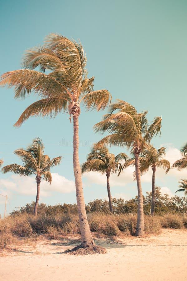 Rocznik Stylowe palmy zdjęcia royalty free