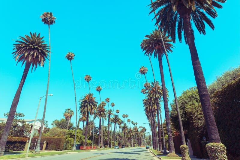 Rocznik tonował ulicę w Beverly Hills z sławnymi palmami wzdłuż drogi fotografia royalty free