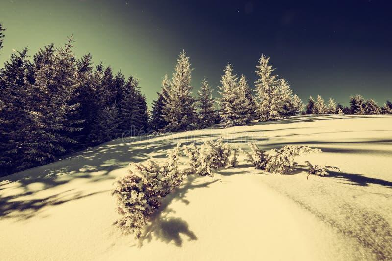 Rocznik zimy las obraz royalty free