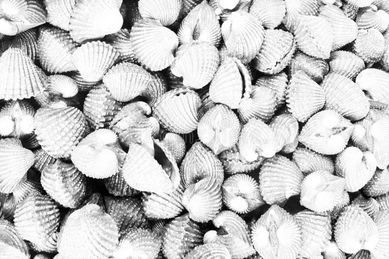Rocznika światła białego owoce morza łuskanie zdjęcie stock