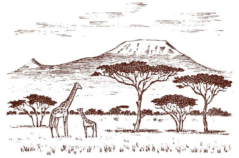 Rocznika afrykanina krajobraz Safari i dzikie żyrafy Kilimanjaro góra w sawannie Zwierzęta grawerujący wręczają patroszony stareg royalty ilustracja