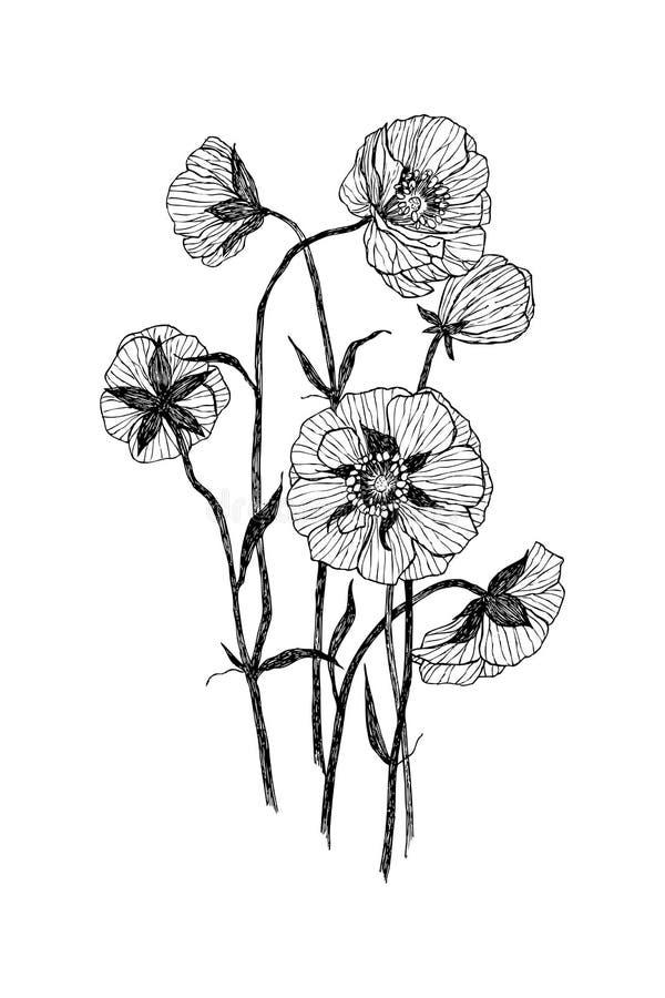 Rocznika botaniczny ilustracyjny kwiat Kwiatu pojęcie Botanica pojęcie 10 tło projekta eps techniki wektor royalty ilustracja