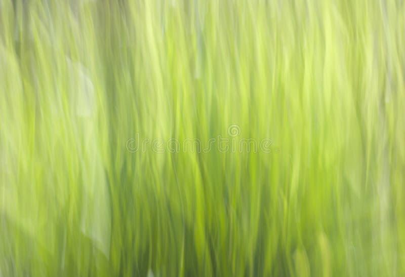 Rocznika brzmienia plamy wizerunek abstrakcjonistyczny bokeh światło nad drzewem w zielonego koloru tle obrazy stock