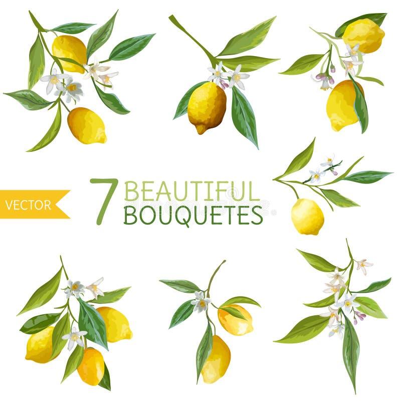 Rocznika cytryny, kwiaty i liście, Cytryna Bouquetes ilustracji