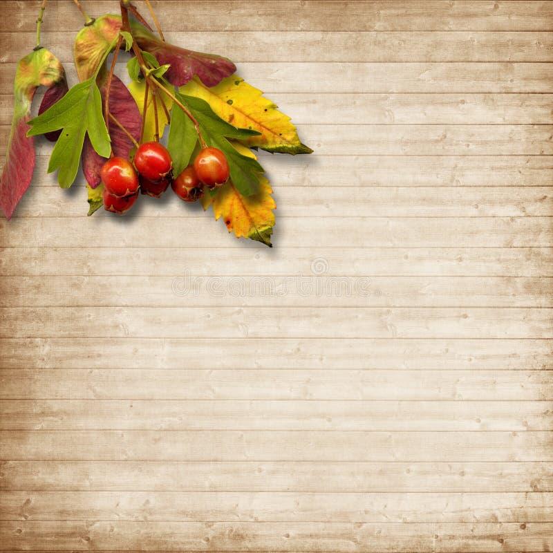 Rocznika drewniany tło z jesień bukietem liście i czerwień obrazy stock