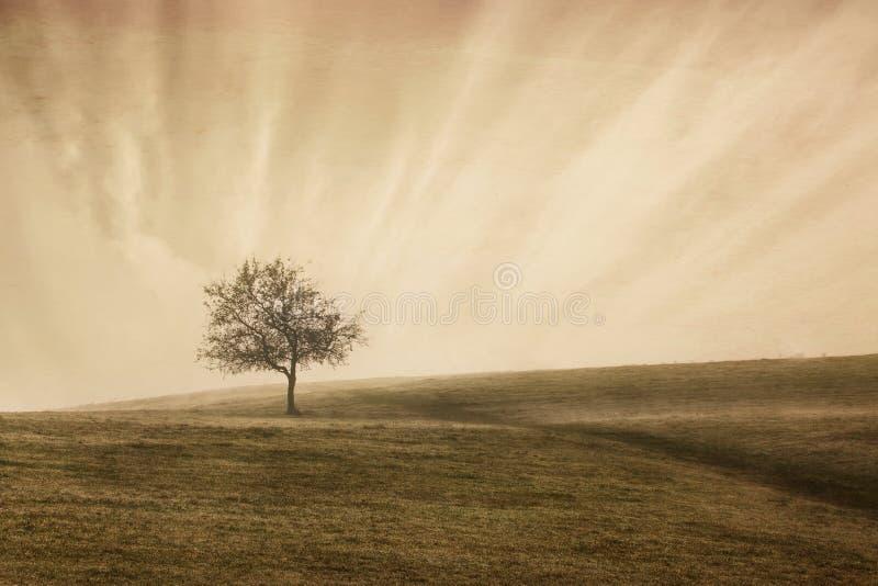 Rocznika drzewo obraz royalty free