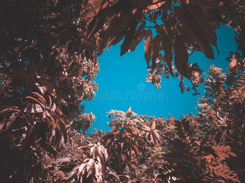 Rocznika drzewo w indie słodkim nastroju od Fortaleza Ceara Brazylia estetyczny obraz royalty free