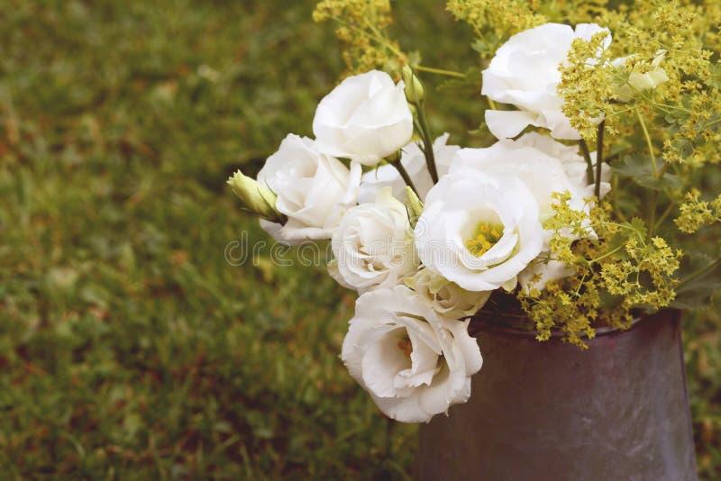 Rocznika dzbanek białe preryjne gencjana na trawie obrazy stock