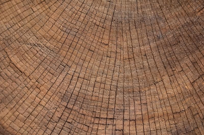 Rocznika grunge tło z krakingową starą drewnianą teksturą z 3D skutkiem, Drzewni pierścionki, dendrochronologia zdjęcie stock
