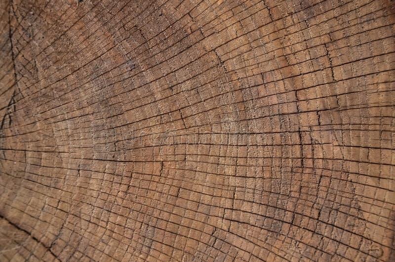 Rocznika grunge tło z krakingową starą drewnianą teksturą z 3D skutkiem, Drzewni pierścionki, dendrochronologia obraz stock