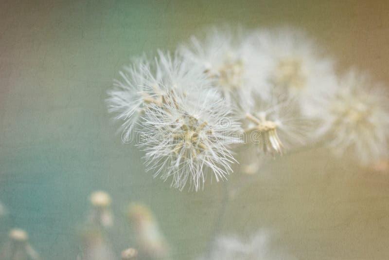 Rocznika kwiat trawa zdjęcie stock