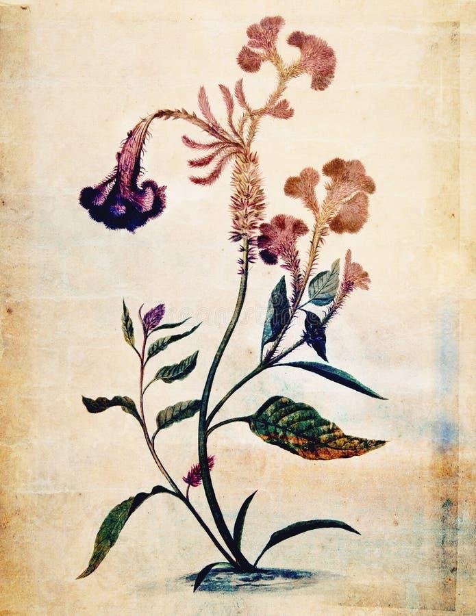 Rocznika kwiatu ściany Stylowa Botaniczna sztuka w bogatych kolorach ilustracja wektor