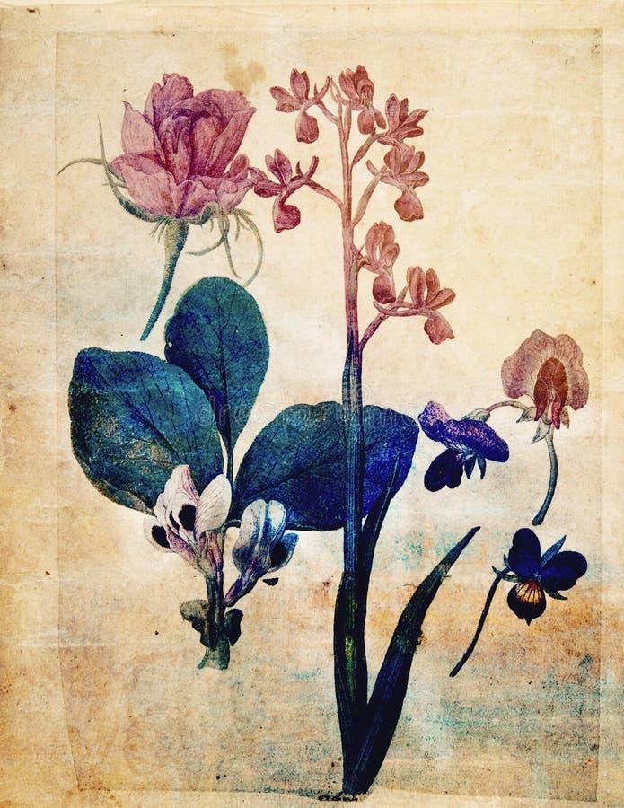 Rocznika kwiatu ściany Stylowa Botaniczna sztuka w bogatych kolorach royalty ilustracja