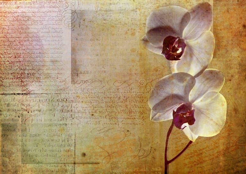 Rocznika kwiatu karta ilustracja wektor