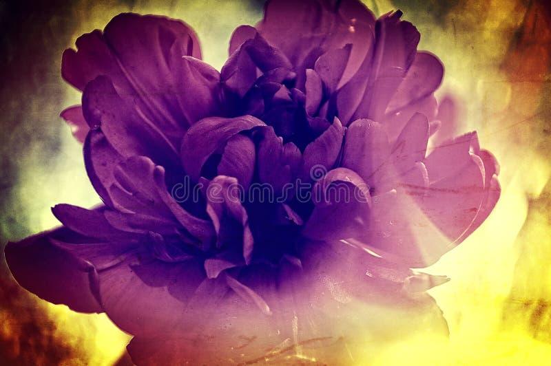 Rocznika kwiatu tekstura fotografia stock