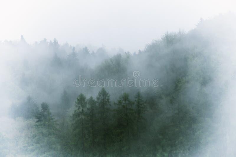 Rocznika mgłowy krajobraz, las z chmurami zdjęcia stock