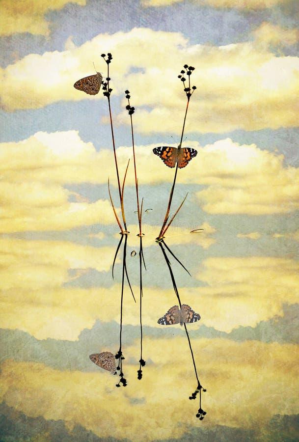 Rocznika motyla odbicia ilustracji