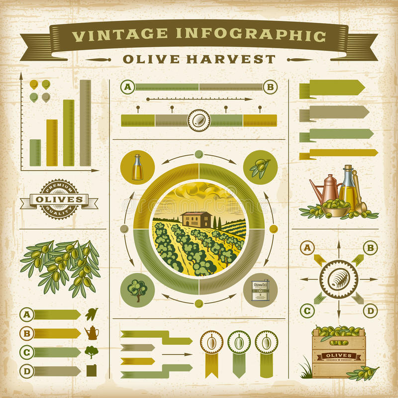 Rocznika oliwnego żniwa infographic set royalty ilustracja