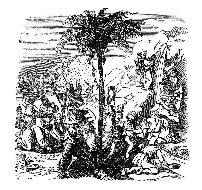 Rocznika rysunek Biblijna opowieść izraelczycy Zaprowadzeni Mojżesz Dostaje wodę i Manna w pustkowiu royalty ilustracja