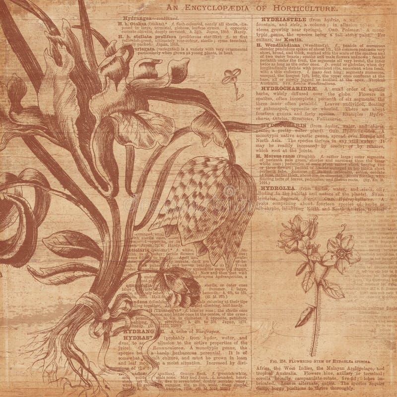 Rocznika tła kolażu papier Horticulture kolażu Digital papier - Botaniczna ilustracja - ilustracja wektor