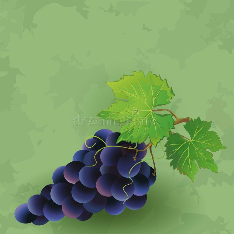 Rocznika tło z czarnym winogronem royalty ilustracja