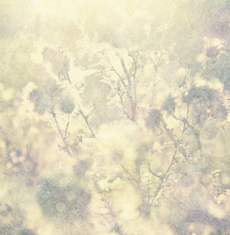 Rocznika tło z natura elementami zdjęcie stock