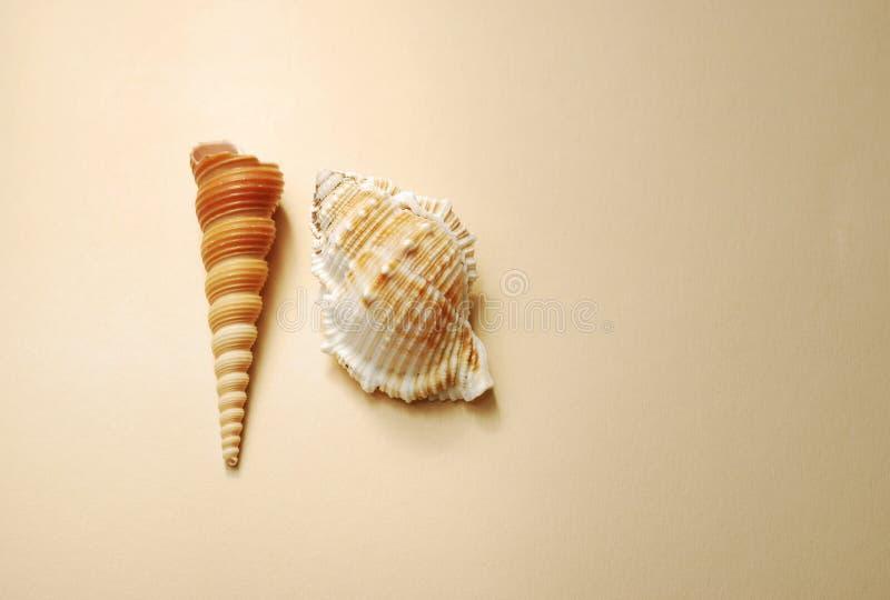 Rocznika tło z seashells obrazy stock