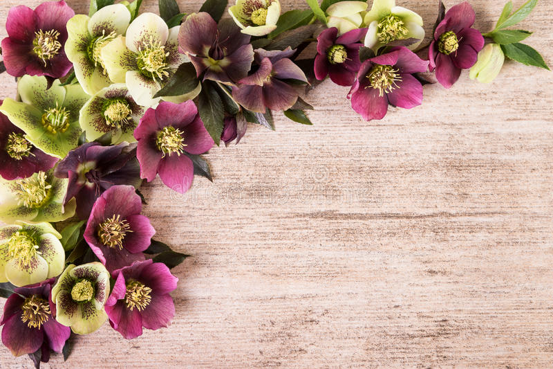 Rocznika tło z wiosna kwiatów przygotowania pastelowymi kolorami Odbitkowa przestrzeń, mieszkanie nieatutowy obraz stock