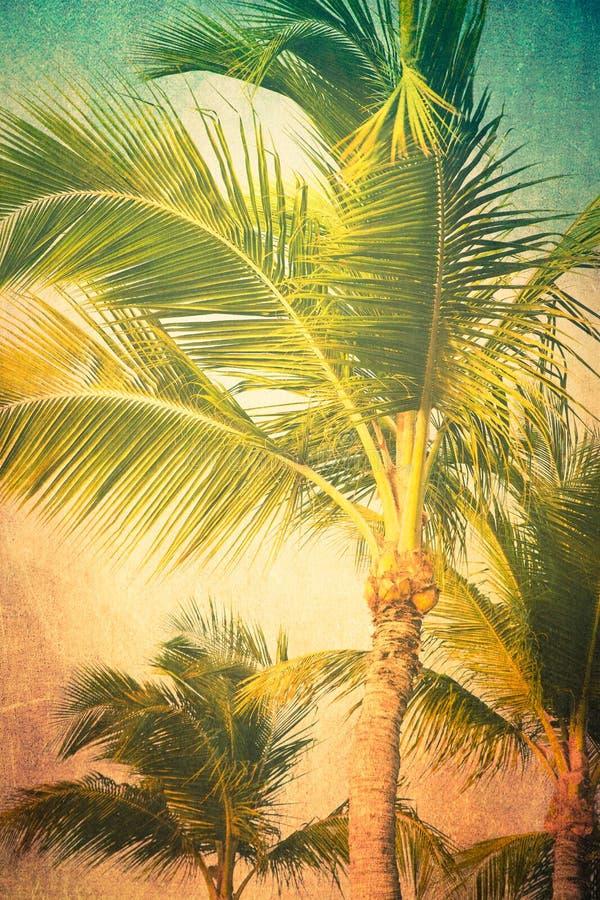 Roczniki Textured drzewka palmowe obrazy stock