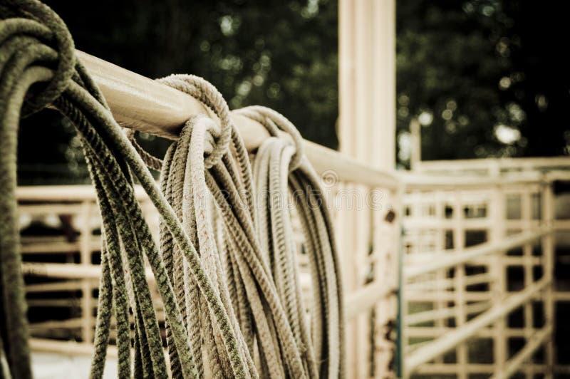 Rodéo de corde de lasso photo stock