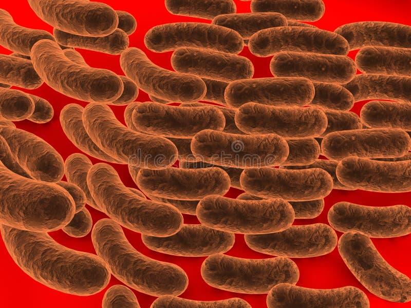 Rod-geformtes Bakterium stock abbildung