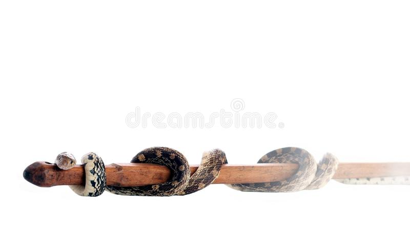 Rod von Asclepius lizenzfreie stockfotos