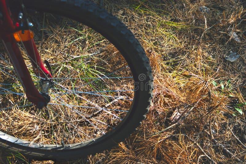 Roda de um Mountain bike vermelho, bicicleta, na terra com agulhas, grama e folhas do pinho Aventura, ciclismo, atividades do esp imagem de stock
